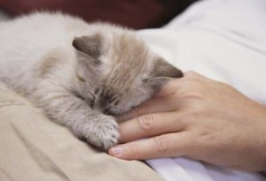 Home Remedies For Treating A Sick Cat