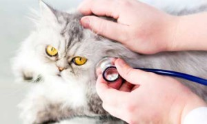 Sick cat: Understanding the 5 warning signs easily
